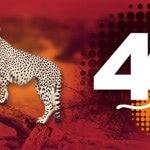 Cheetah, el 4G de Ocean's, llega en septiembre