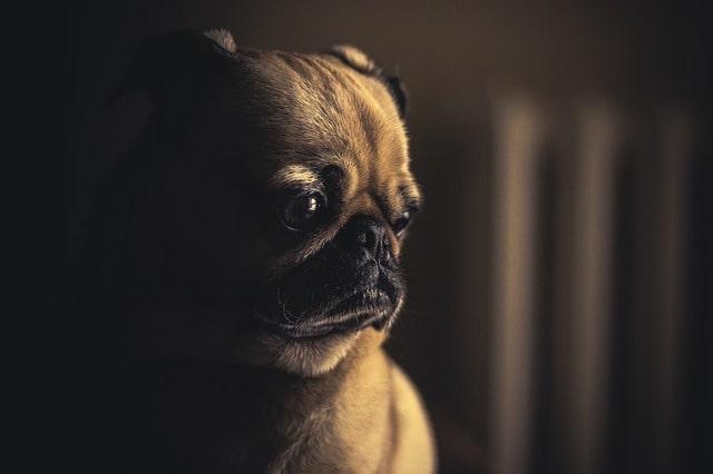 dog-690176_640-min