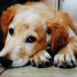 Bankia retira sus primeras cuentas: adiós a la Cuenta_ON y la Cuenta Dog Friendly